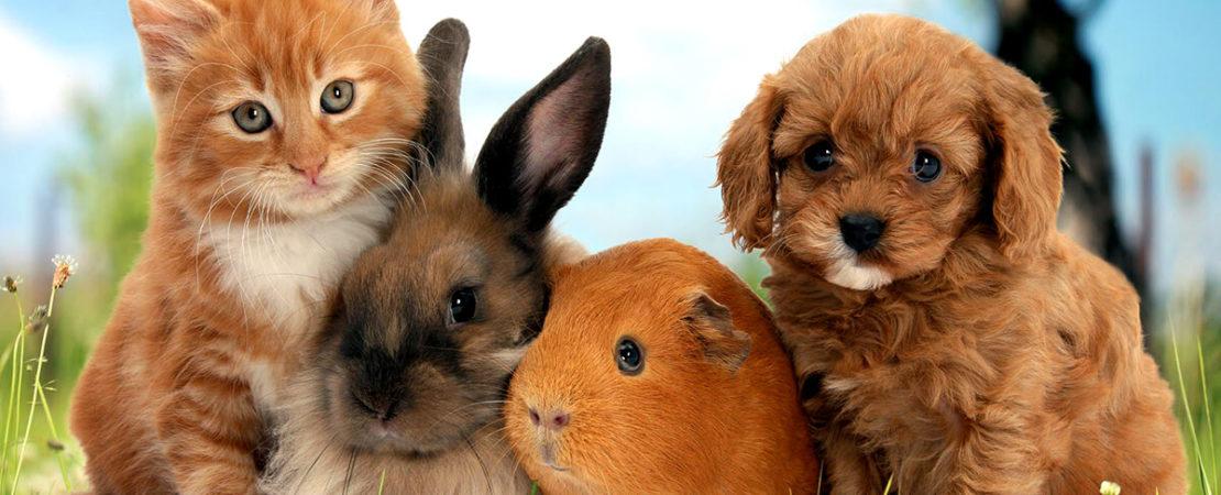 С любовью и заботой о животных: новые законопроекты