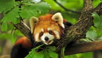 В ГД внесён законопроект по защите животных